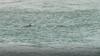T-dolphin